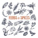 Ört- och kryddasmaktillsatser 1 vektor illustrationer