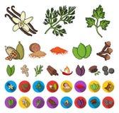 Ört och kryddatecknad film, plana symboler i den fastställda samlingen för design Olika sorter av smaktillsatsvektorsymbolet lage stock illustrationer
