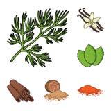 Ört- och kryddatecknad filmsymboler i uppsättningsamlingen för design Olika sorter av smaktillsatsvektorsymbolet lagerför rengöri stock illustrationer