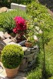 Örtagård med det lilla äppleträdet och buxusen Royaltyfri Bild
