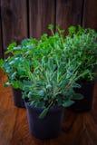 Örtar för att plantera Royaltyfria Foton