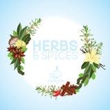 örtar för fjärdcardamonvitlök blad vanilj för kryddor för pepparrosmarinar salt Royaltyfria Bilder