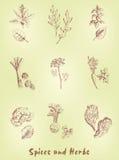 örtar för fjärdcardamonvitlök blad vanilj för kryddor för pepparrosmarinar salt Royaltyfri Bild