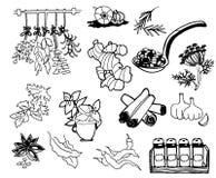 örtar för fjärdcardamonvitlök blad vanilj för kryddor för pepparrosmarinar salt Hand dragen vektorillustrationuppsättning Inrista royaltyfri illustrationer
