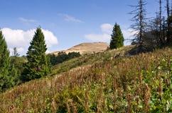 Örtar i bergen Arkivbild