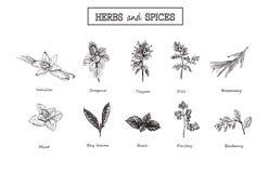 örtar inställda kryddor medicinal örtar royaltyfri illustrationer
