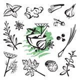 Örtar och kryddor vektor illustrationer