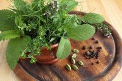 Örtar och kryddor Royaltyfria Bilder