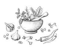 Örtar och kryddor i en mortel stock illustrationer