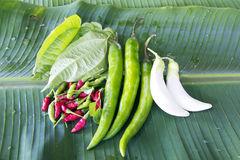 örten kryddar thai Royaltyfria Bilder