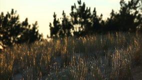 Örter i ett fält stock video