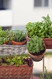 Örter och grönsaker på balkong Arkivfoto