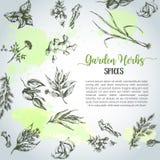 Örter och kryddabakgrund Ört växt, dragen uppsättning för krydda hand Organiskt trädgårds- inrista för örter Botaniskt skissar vektor illustrationer