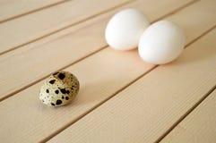 Örter och växter i de fega äggen, hönaredet och ägg, bilder av äggen i vaktel`en s bygga bo, höna- och vaktelägg, pic Arkivbilder