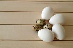 Örter och växter i de fega äggen, hönaredet och ägg, bilder av äggen i vaktel`en s bygga bo, höna- och vaktelägg, pic Royaltyfria Bilder