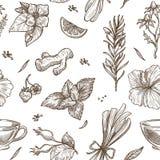 Örter skissar modellbakgrund Sömlös design för vektor av örtte royaltyfri illustrationer