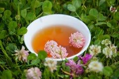 Örtte från växt av släktet Trifolium som behandling för perforatum för medicin för hypericum för fördjupning effektiv växt- bara Royaltyfri Bild