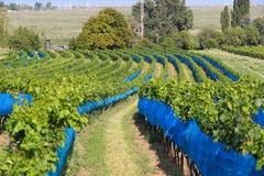 Österreich-Weinregion Stockbilder
