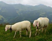 Österreichische Landschaft mit Schafen auf dem Gras Stockfotos