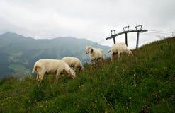 Österreichische Landschaft mit Schafen auf dem Gras Lizenzfreie Stockbilder