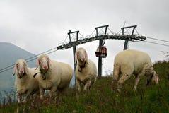 Österreichische Landschaft mit Schafen auf dem Gras Lizenzfreies Stockbild