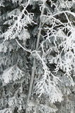 Österrike Salzburger land, vinterlandskap royaltyfri fotografi