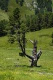 Österrike Tirol, Kaunertal Arkivbilder