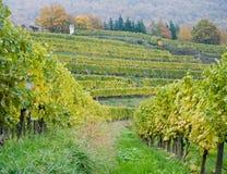 Österrike wineyard Arkivfoto