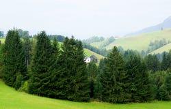 Österrikiska skogar för grön smaragd i sommar Arkivfoto