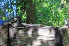 Östliche Strumpfband-Schlange stockbilder