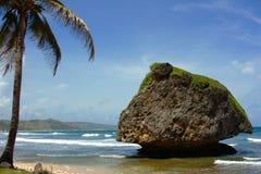 östlig barbados kust Fotografering för Bildbyråer