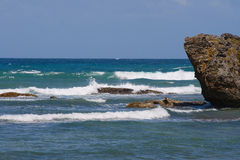 östlig barbados kust Arkivbild