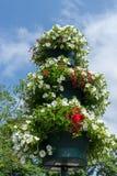 ÖSTLIG GRINSTEAD, VÄSTRA SUSSEX/UK - JULI 23: Östliga Grinstead i Blo Arkivbilder