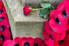 ÖSTLIG GRINSTEAD VÄSTRA SUSSEX/UK - NOVEMBER 13: Vallmo på kriget Fotografering för Bildbyråer
