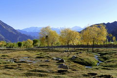 Östlig Himalaya äng i Indien Arkivfoto
