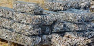 Östlig ostron som återanvänder projektet, St Johns län Florida arkivfoto