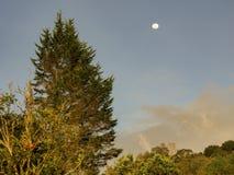 Östlig sida av solnedgången med månen och ett stort granträd arkivbilder