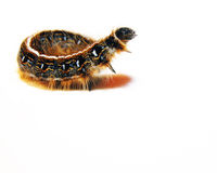 östlig tent för caterpillar fotografering för bildbyråer