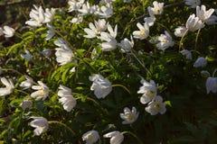 östliga blommor och idyllics royaltyfria bilder