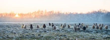 Östliga Frisia Arkivfoto