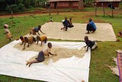 östliga uganda Arkivbild
