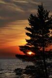 Östliga White Pine på kust av Lake Huron på solnedgången royaltyfria foton