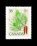 Östliga White Pine, Pinusstrobus, Definitives 1977-79 (sidor) Arkivbild