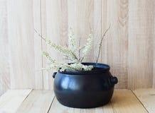 Östligt asiatiskt begrepp, vit blommande filial på träbakgrund arkivfoto