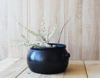 Östligt asiatiskt begrepp, vit blommande filial på träbakgrund arkivbild