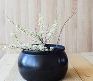 Östligt asiatiskt begrepp, vit blommande filial på träbakgrund royaltyfri fotografi