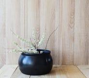 Östligt asiatiskt begrepp, vit blommande filial på träbakgrund royaltyfria foton