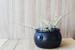 Östligt asiatiskt begrepp, vit blommande filial på träbakgrund arkivfoton