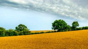 Östligt Sussex-plogat fält för råg royaltyfria bilder