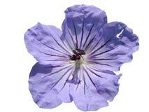 ÖUrup blommor Royaltyfri Fotografi